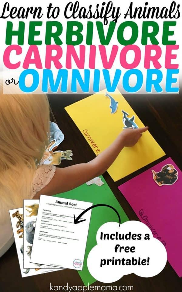 Learn to Classify Animals: Herbivore, Carnivore, or Omnivore?