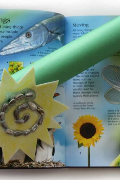 Brighten Up Your Day: DIY Sunflower Craft